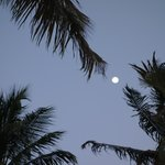 Full moon through the palms