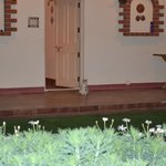 Entrance to room with little cat standing guard