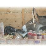 Elevage d'ânes de Provence et cosmétiques au lait d'ânesse