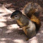 schattig eekhoorntje