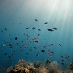 Baliku Dive Resort (Amed Bali Diving)