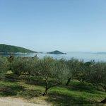 オリーブの木と瀬戸内海