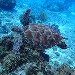 LOVE the sea turtes