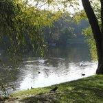 Wildfowl lake