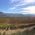 Una panorámica de los viñedos