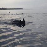 Dolphins at Kizimkazi
