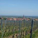 Bergheim depuis le vignoble