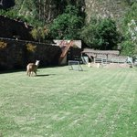 Resident lawnmower