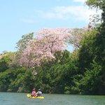 Sitee River kayaking