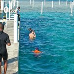 area to snorkel with the nurse sharks