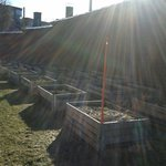Тюремный огород