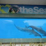 Nearby Swimming with Dolphins experience