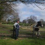 Farm Meadow