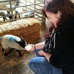 Feeding one of the lambs.