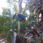 One of seveal beatiful birds in the garden