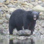 Black bear viewed on our trip