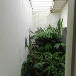 Un pequeño jardincito cubierto desde la ventana del baño.