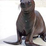 Sea Lion Pup Richard C. Murray/RCM IMAGES, INC