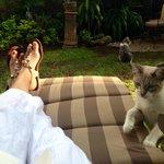 jardin / garden con el gato mas cariñoso del mundo