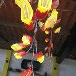 Tree of fire flower