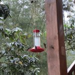 Hummingbird feeder on patio
