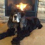 Mungo enjoying the fireplace in the   Fisher cabin