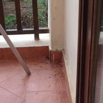 Bird droppings on the patio
