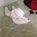 Bichinhos de toalha no quarto!