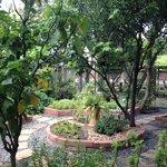 Tam's organic garden