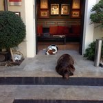 The hotels dogs - big old soppy fellas - no bother if you're not a dog fan