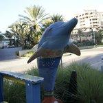 Clear sky Dolphin