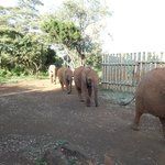 Elephants arrive for their supper (not at the hotel)