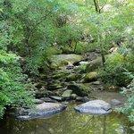 creek along trail
