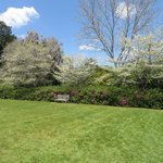 Azaleas and Dogwoods blooming in a secluded Middleton courtyard