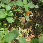 Butterflies in our garden