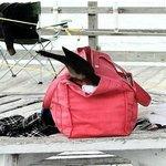 sneaky bird going into purse