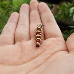 The caterpillar