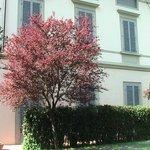 albero del parco e facciata della villa