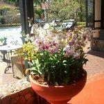 Blumen am Eingang zum Restaurant