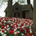 Abandoned in a Field of Beauty