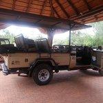 Safari transport!