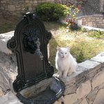 hotel cat, munchkin