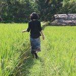 房間外的稻田
