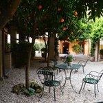 Eat al fresco under the orange trees