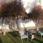 novotel cairo airport - angolo giardino 2