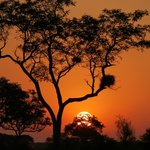 kruger game drives areas