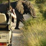elephants cross so nearby