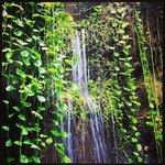 Telus Rainforest