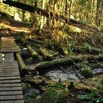 Trails in Lynn Canyon