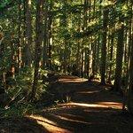 Lynn Canyon Trails